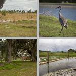 Restoring a Wetland Ecosystem photographs