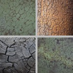 Reticulated Texture photographs
