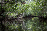 Ripples on Water and Mangroves at Halfway Creek in Everglades National Park