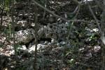 Rock Seen Through Tree Branches