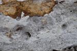Rock with Tiny Pores