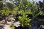 Rocks and Vegetation