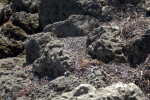 Rocks at Biscayne National Park