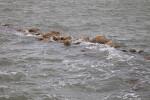 Rocks in Choppy Water