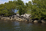Rocks, Water, and Tress at Biscayne National Park