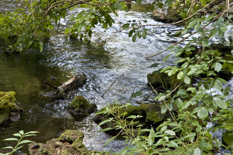 Rocky Bank of the Hillsborough River