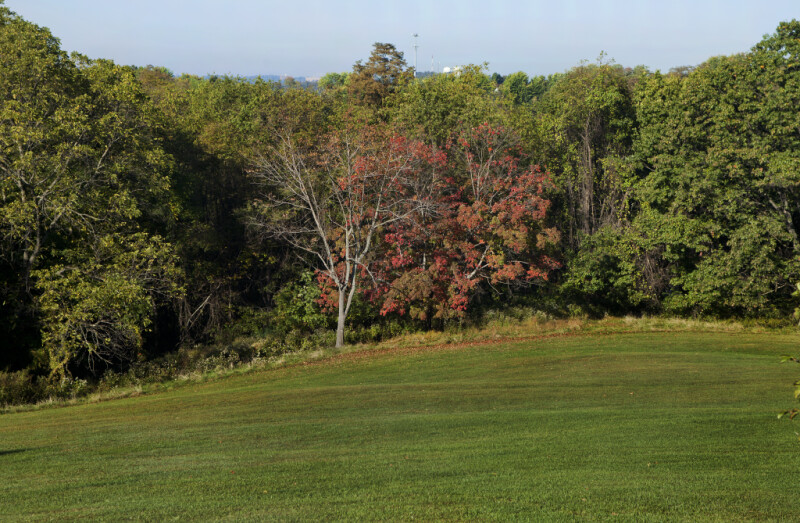Rolling Grass Hill and Tree at Boyce Park