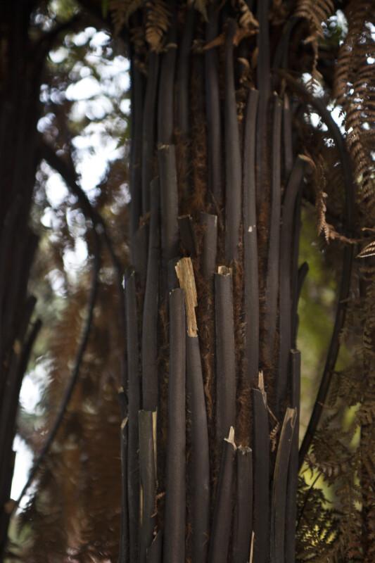 Rough Tree Bark