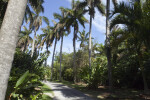 Row of Palms Along Footpath
