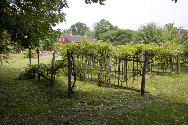 Row of Wooden Trellises Supporting Grape Vines at Old Economy Village