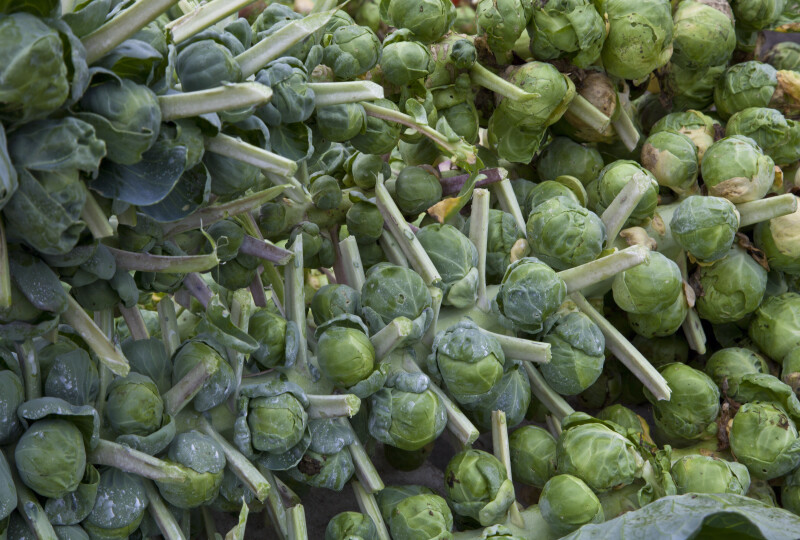 Rows of Brussel Sprouts at the Monroeville Farmers' Market