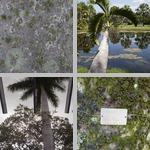 Royal Palms photographs