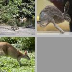 Running photographs