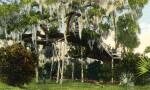 Rustic Seat in a Big Tree in Daytona, Florida