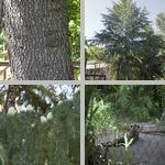 Sacramento Zoo photographs