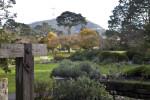 San Francisco Botanical Garden in Early December