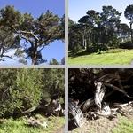 San Francisco Botanical Garden photographs