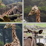 San Francisco Zoo photographs