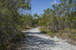 Sand Trail Running Through Medium-Sized Trees