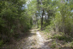 Sand Trail Sparsely Covered in Grass and Surrounded by Trees