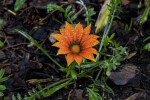 Saturated Orange Flower