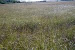 Sawgrass and Hammocks