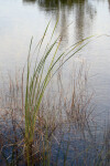 Sawgrass at Water's Edge