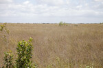 Sawgrass Field at Long Pine Key of Everglades National Park