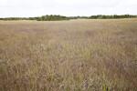 Sawgrass Field at Shark Valley of Everglades National Park