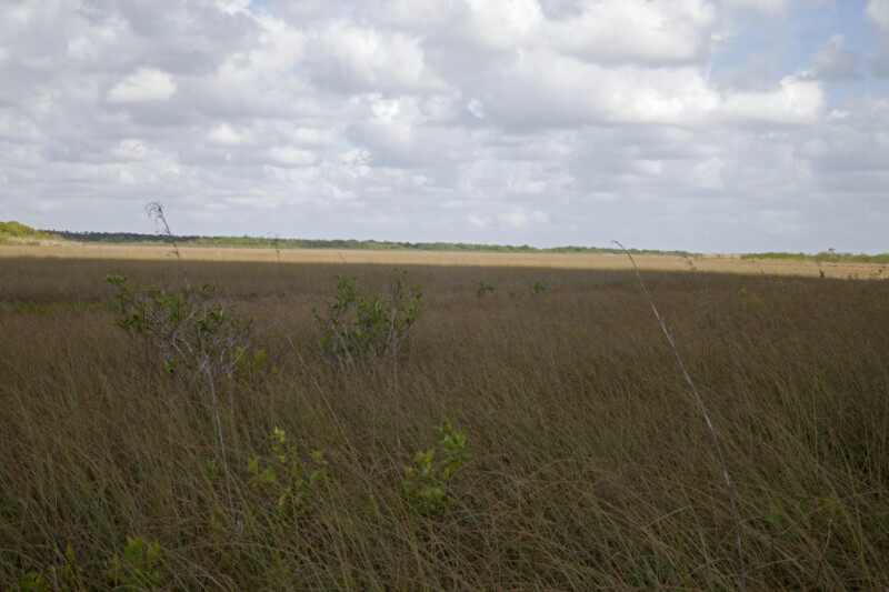 Sawgrass Prairie at Anhinga Trail of Everglades National Park