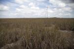 Sawgrass Prairie
