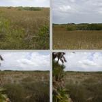 Sawgrass photographs