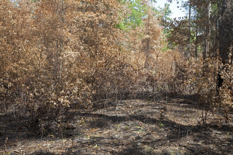 Scorched Area