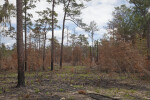 Scorched Portion of the Chinsegut Wildlife and Environmental Area