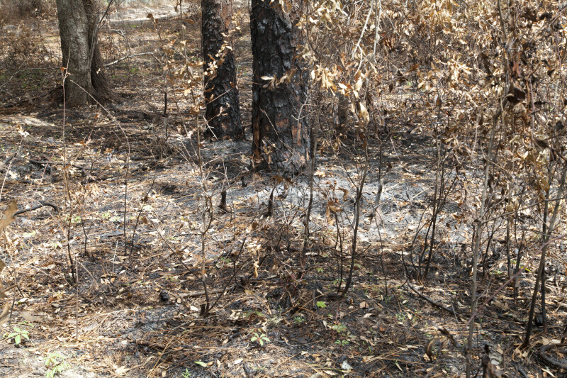 Scorched Understory