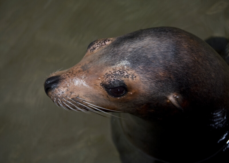 Sea Lion from Above