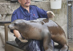 Sea Lion Resting in its Trainer's Lap