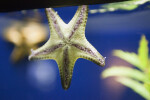 Sea Star Underside