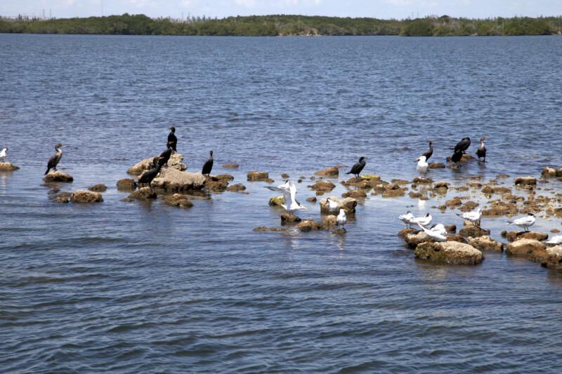 Seabirds Resting on Rocks