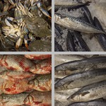 Seafood photographs