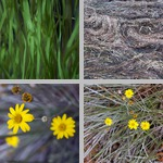 Seagrasses photographs