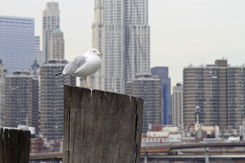 Seagull and City