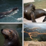 Seals photographs