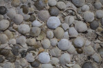 Seashells Close-Up
