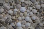 Seashells Close-Up