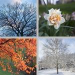 Seasons photographs