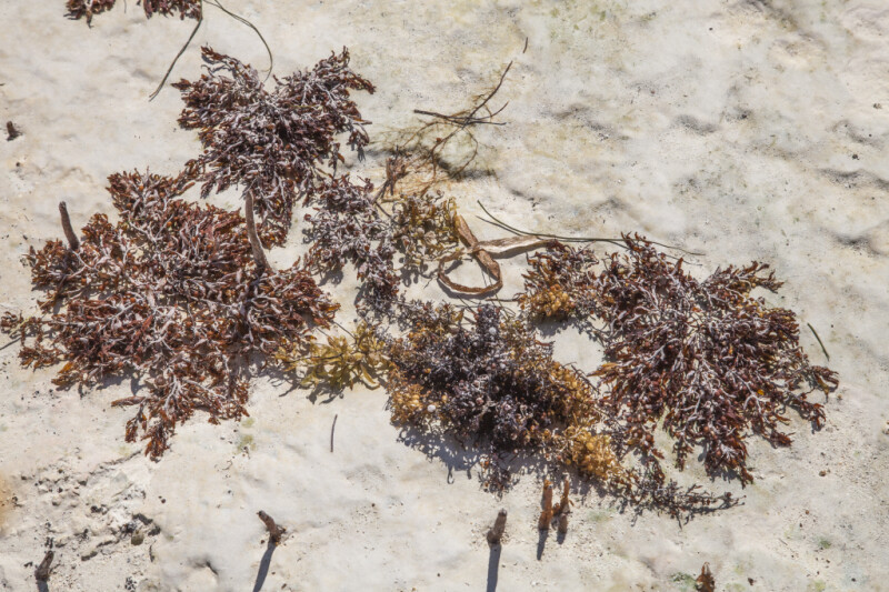 Seaweed on Caked Sand at Biscayne National Park