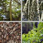 Seeds photographs