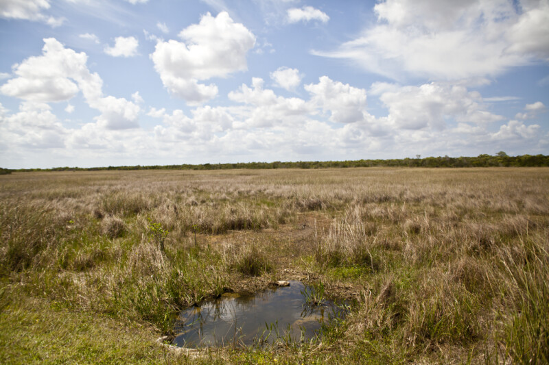 Seemingly Endless Field of Sawgrass Beyond a Puddle