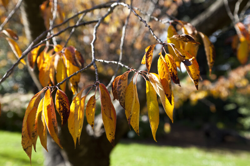 Serrated, Sunlit Leaves